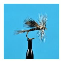 Irish Cormorant Olive